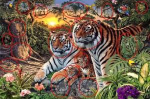 foto-tigres-2